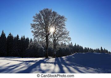 winterlandschap, en, sneeuw, verpakte, bomen