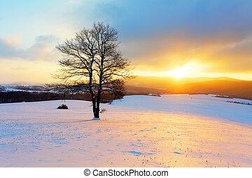 winterlandschap, in, sneeuw, natuur, met, zon, en, boompje
