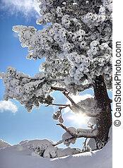 winterly, árvores