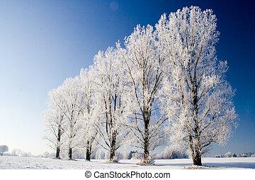 winterrow