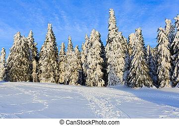 wintertime, árvore, pinho, nevado