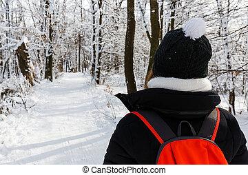 wintertime, bosque, passeio