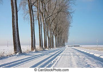 Wintertime in the farmland of the Netherlands