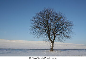 Wintertree - lonely tree on a sunny winterday