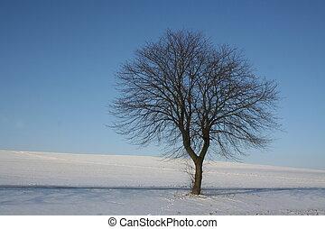 Wintertree - lonely tree on a sunny winterday