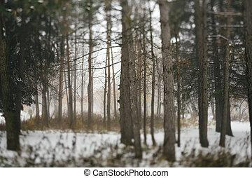 wintery, floresta