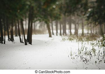 wintery, floresta, cena