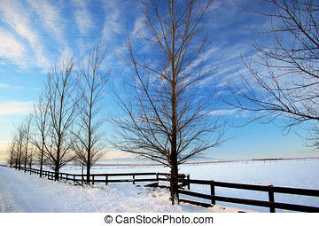 Wintery scene. - A winter photo of a row of trees and a...