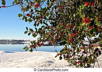 winter scene behind a holly bush