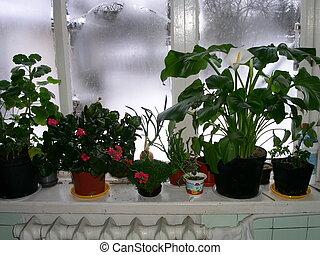 wintery window scene - window plants on cold winter day