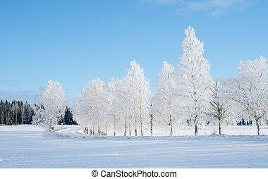 Wintry landscape and frosty branch