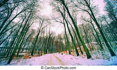 Wintry landscape in Poland - Wintry landscape in Southern...