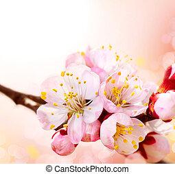wiosna, blossom., morela, kwiaty, brzeg, sztuka, projektować