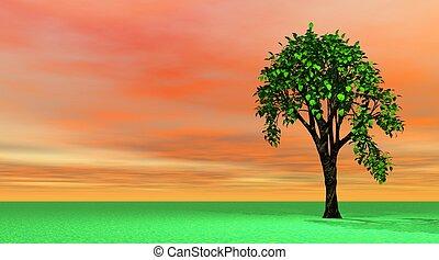 wiosna, drzewo