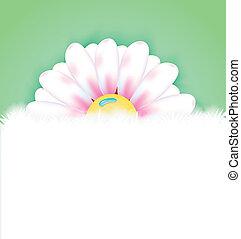 wiosna, kopia, kwiat, przestrzeń