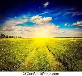 wiosna, lato, rolna droga, w, zielone pole, krajobraz