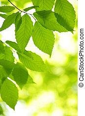 wiosna, liście, zielony