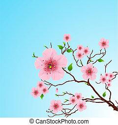 wiosna, tło, kwiatowy