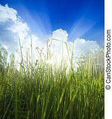 wiosna, tło, trawa