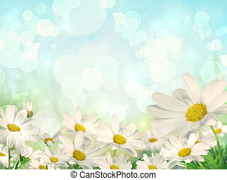 wiosna, tło, z, margerytki