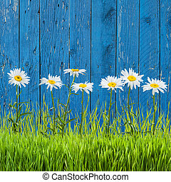 wiosna, trawa