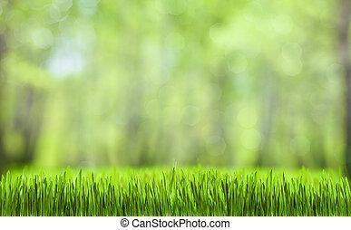 wiosna, zielony abstrakt, las, kasownik, tło