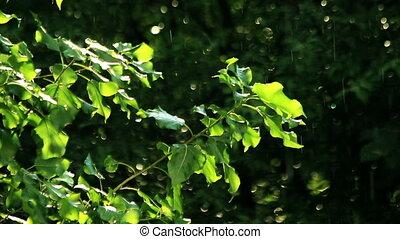 wiosna, zielony, liście, deszcz, pod