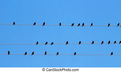 Wire Birds - Birds sitting on wires against a blue sky.