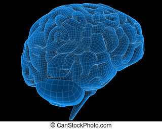 wire brain - 3d rendered illustration of a human brain