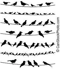 wire2, uccello