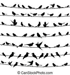 wire4, uccello