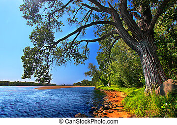 Wisconsin River Landscape Portage - Spreading branches of an...