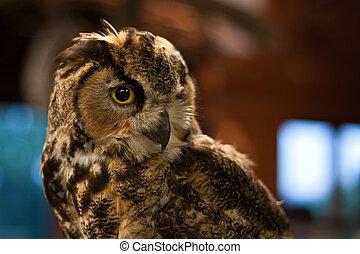 small owl portrait in a studio setting