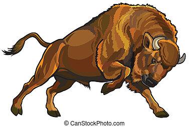 european bison - wisent european bison, attacking pose, side...