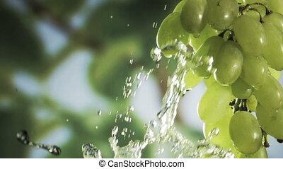 Wishihg a bunch of fresh heaithy green grapes. HD