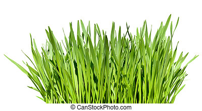 wisp of grass - tuft of grass isolated over white background