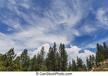 Wispy Clouds Above Trees in Summer