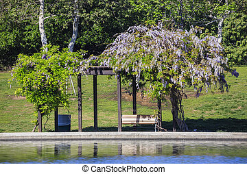 Wisteria and bench at the park