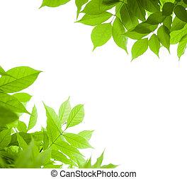wisteria, angle, sur, -, page, arrière-plan vert, feuille, blanc, frontière, feuilles