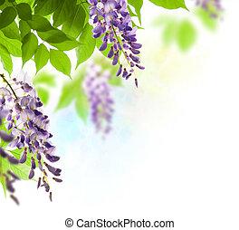 wisteria, kąt, na, -, strona, zielone tło, liść, biały, brzeg, liście