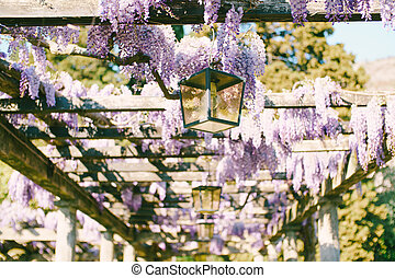 Wisteria winding along the wooden beams of the arch with hanging street lamps.