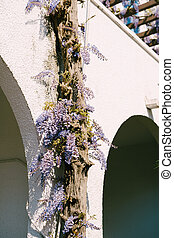 Wisteria winds along the wall of a building with arched passages.