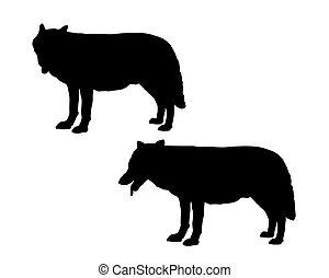 wit buffelen