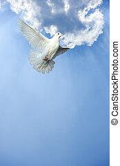 wit dove, in, kosteloos, vlucht