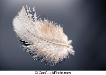 wit dove, veer