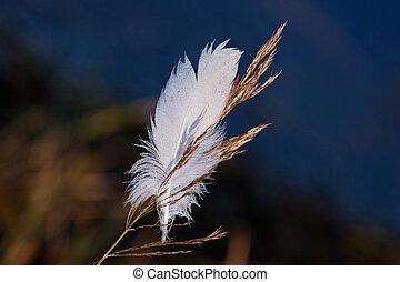 wite veer