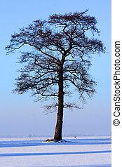 witer, arbre