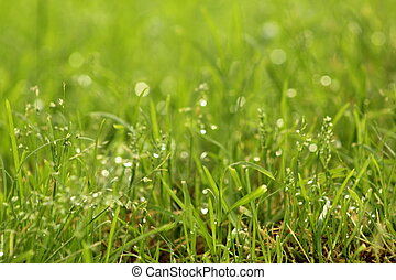 With water grass