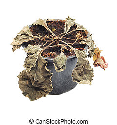 withered plant in a pot