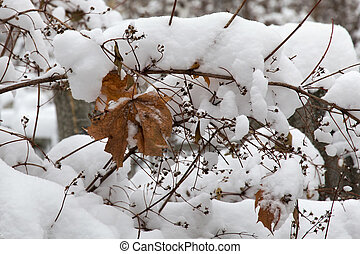 Withered autumn leaf hanging on a branch covered with snow.